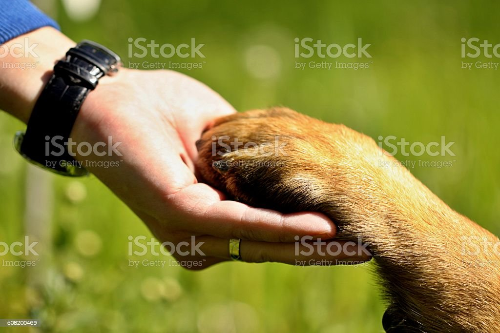 Dog paw and man hand stock photo