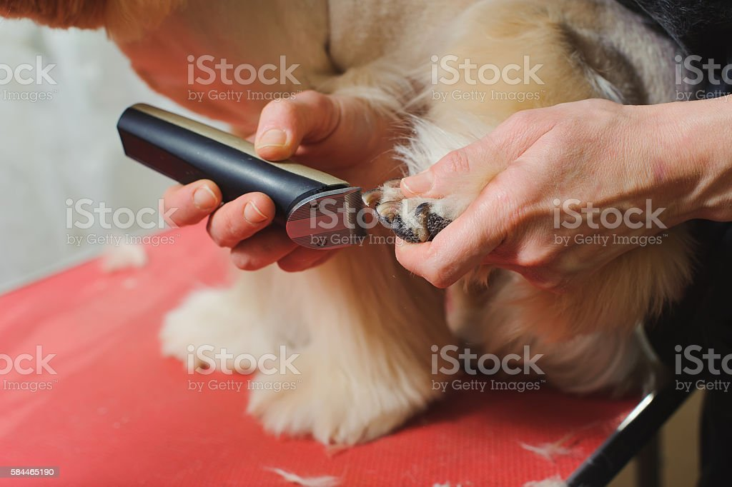 Dog paw grooming stock photo