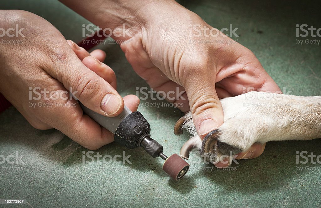 Dog Paw Grooming With Sander Close-up royalty-free stock photo