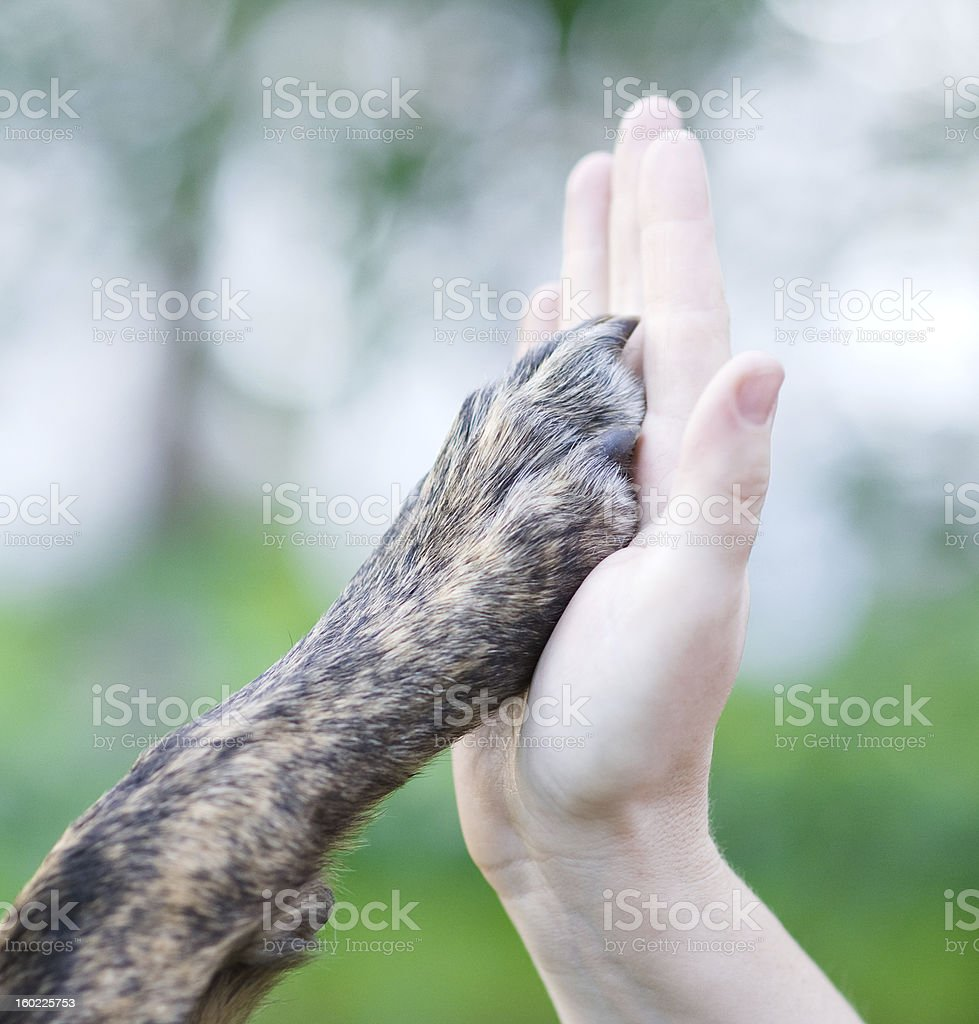 Dog paw in a human hand, high five style stock photo