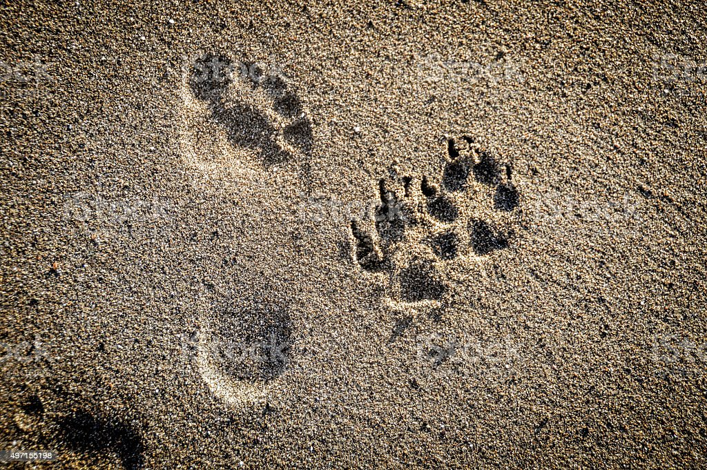 Dog paw prints in the sand on beach stock photo