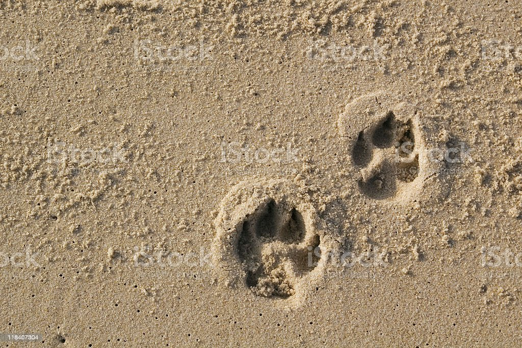 Dog paw prints stock photo