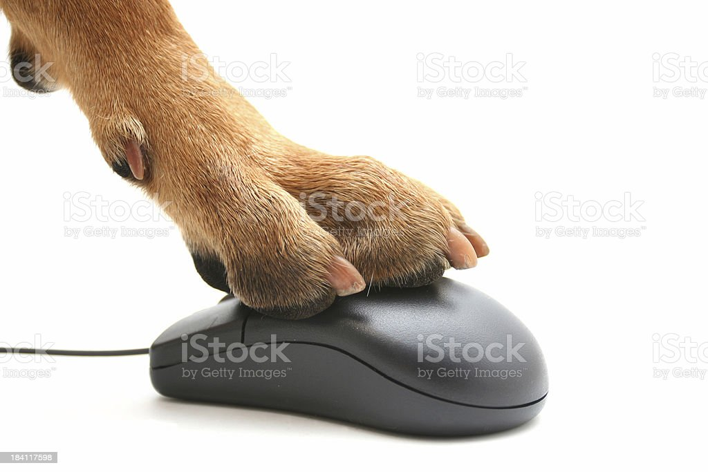 A dog paw pushing a computer mouse backwards stock photo