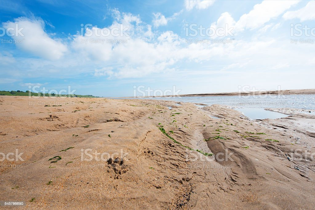 Dog pawprint on the beach stock photo