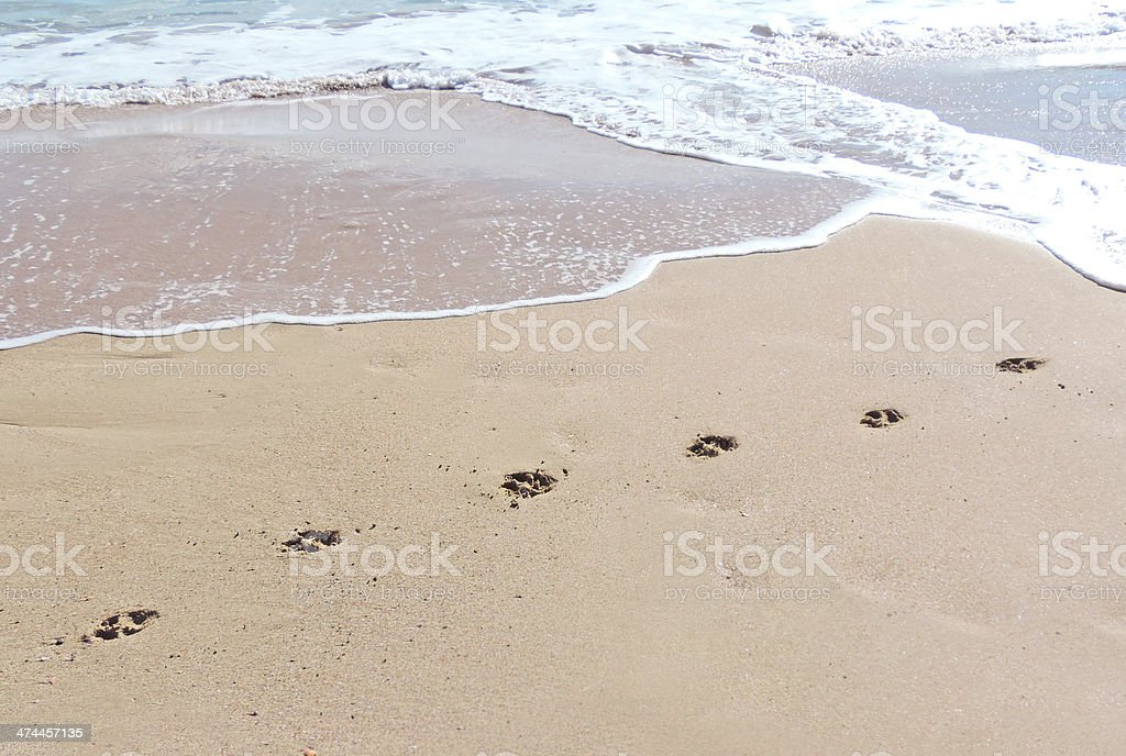 Dog pawprints stock photo