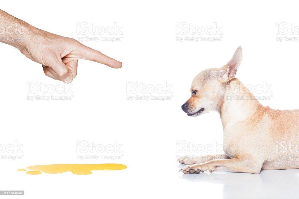 dog pee stock photo