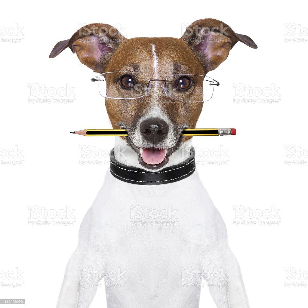 dog pencil stock photo