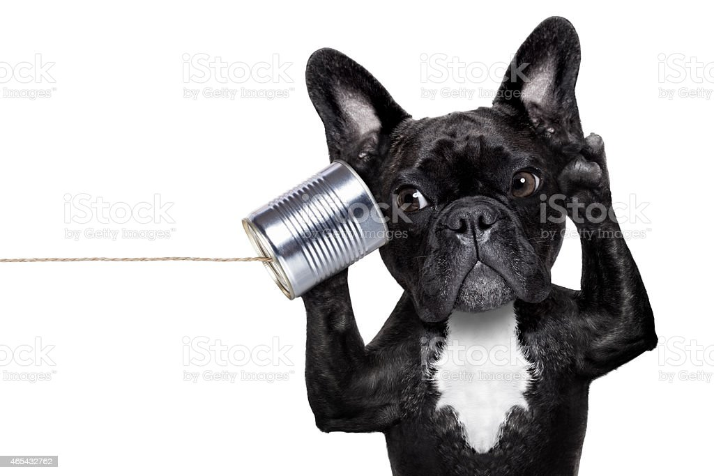 dog phone telpehone stock photo
