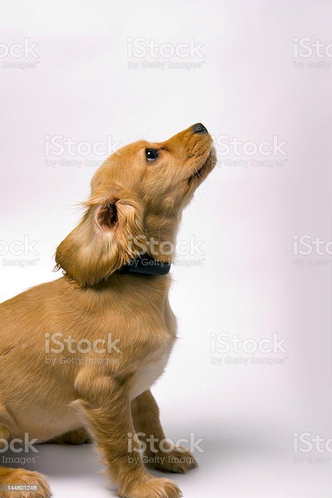 Dog. stock photo