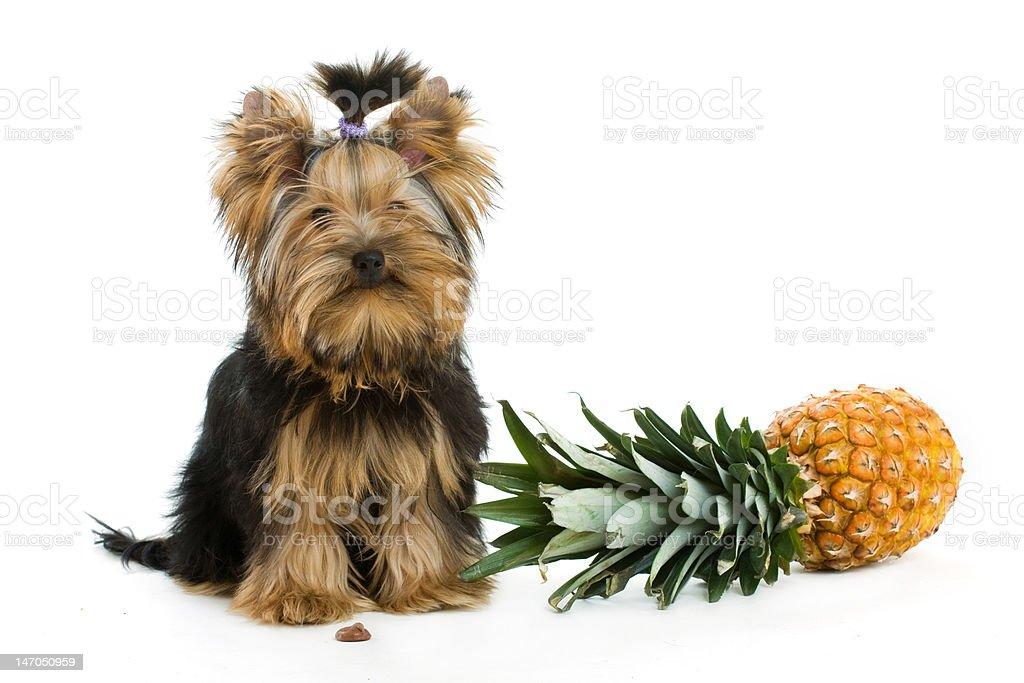 - Hund Lizenzfreies stock-foto