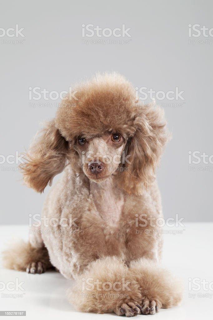 Dog royalty-free stock photo
