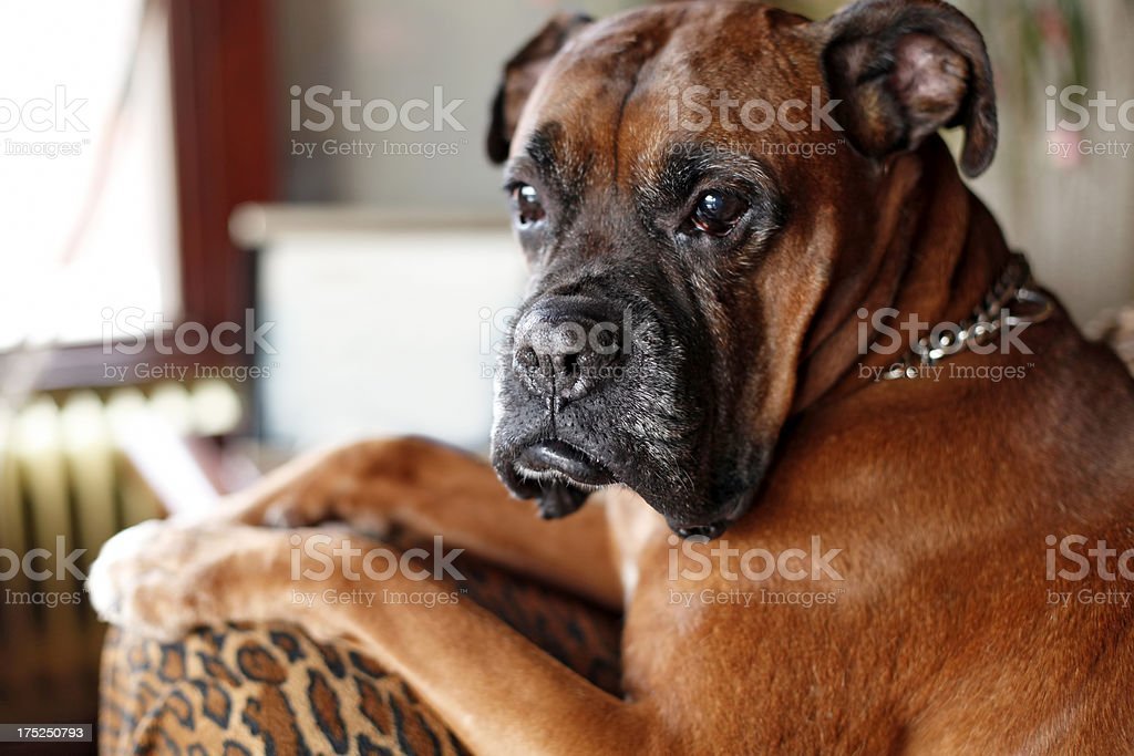 dog royalty-free stock photo