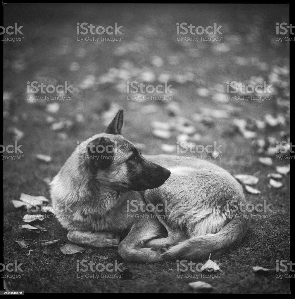 Dog stock photo