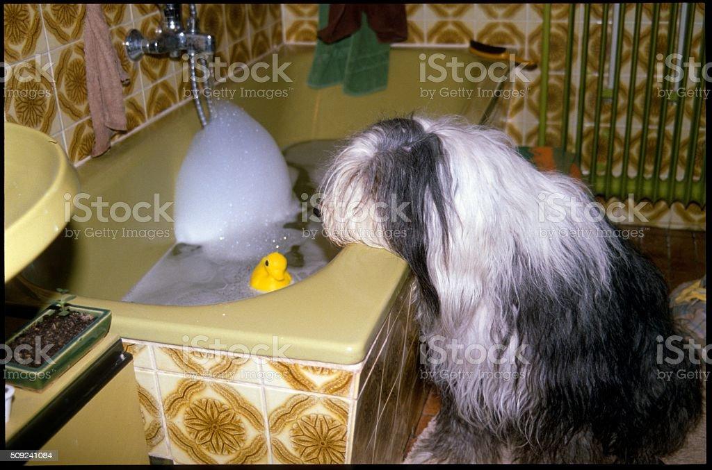 PON Dog stock photo