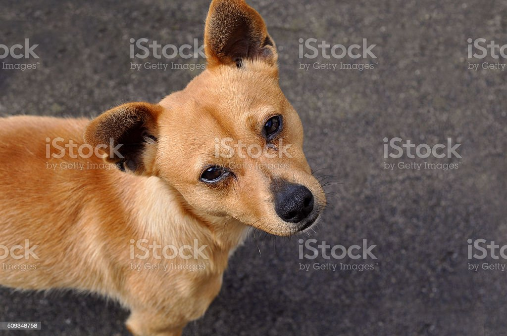 Dog stock photo