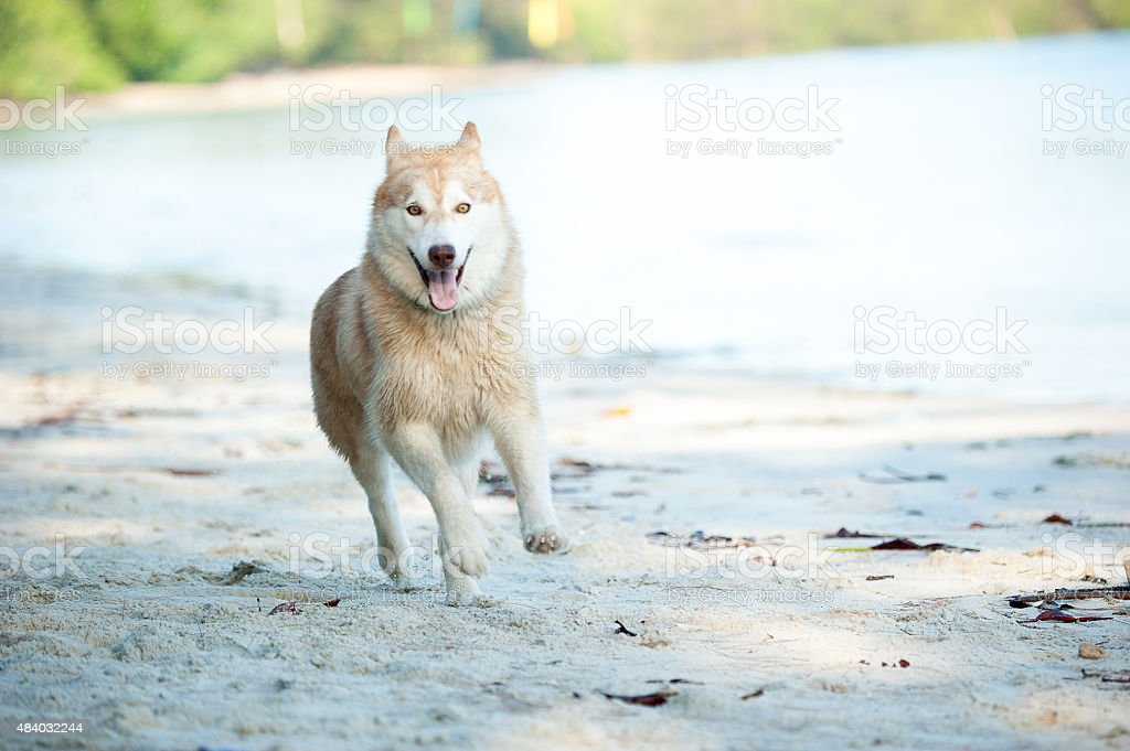 Dog playing at the beach stock photo