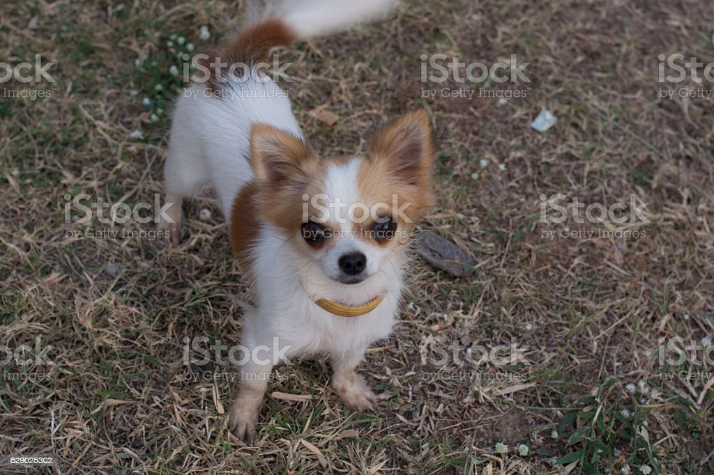 Dog playing in the grass Scattered trash-strewn field All happy stock photo