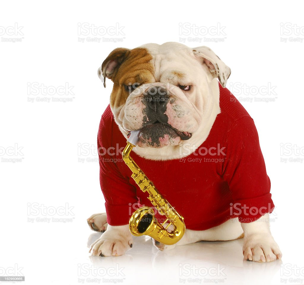 dog playing musical instrument royalty-free stock photo