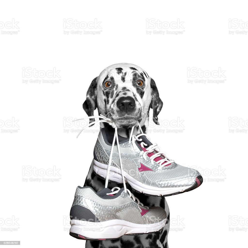Dog playing sports -- running and jogging stock photo