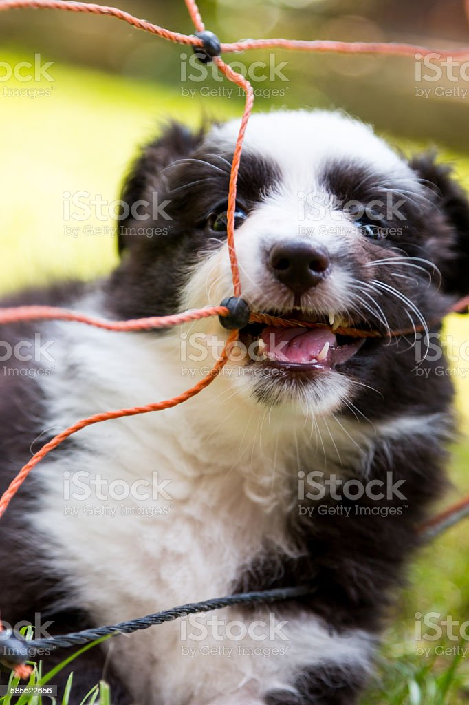 Dog playing with rope stock photo