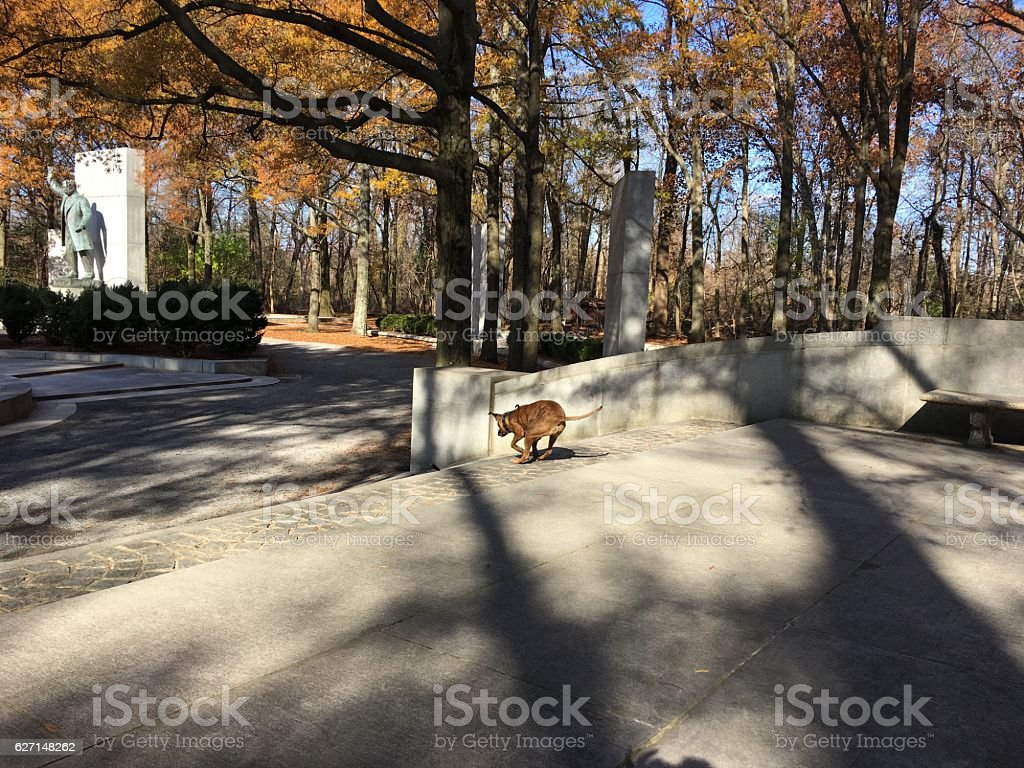 dog playing with stick in a forest stock photo