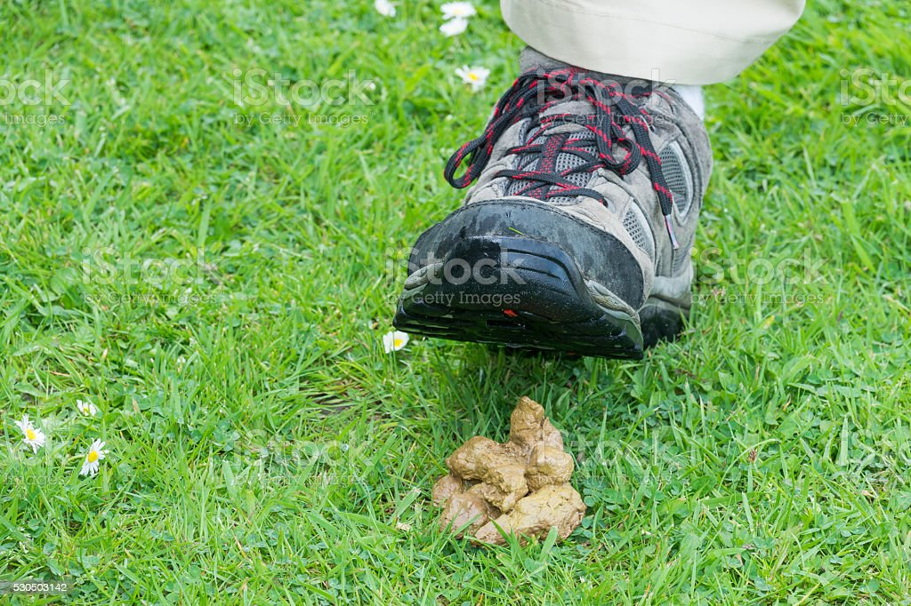 Dog poop in the grass stock photo