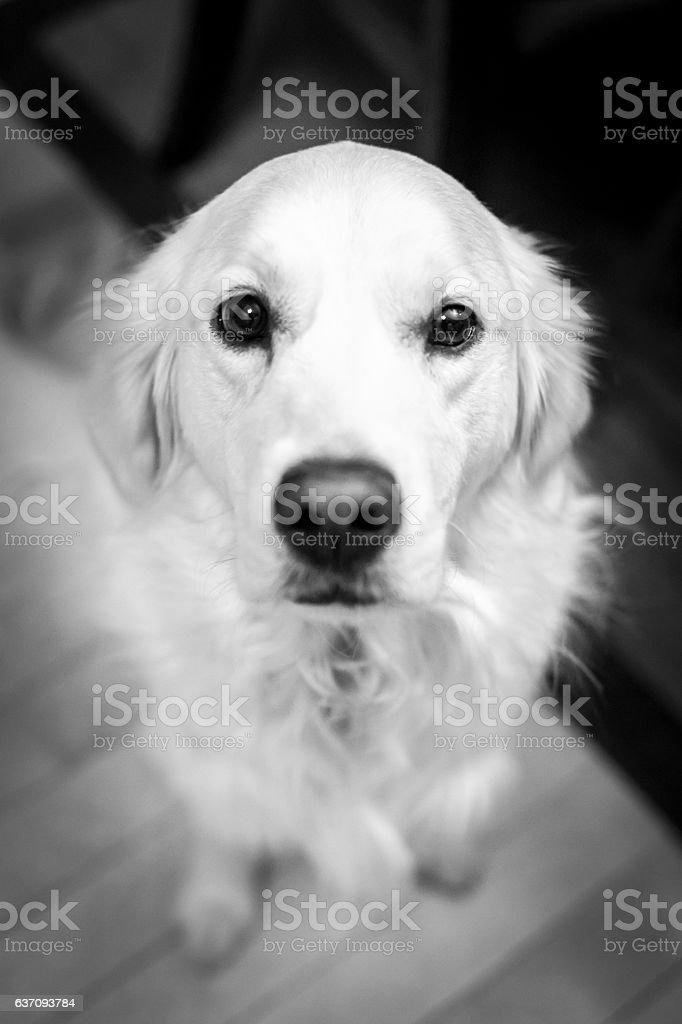 Dog Portrait stock photo