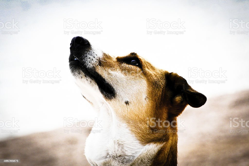 dog portrait, side view stock photo