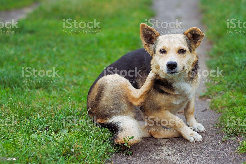 dog posing outdoors stock photo