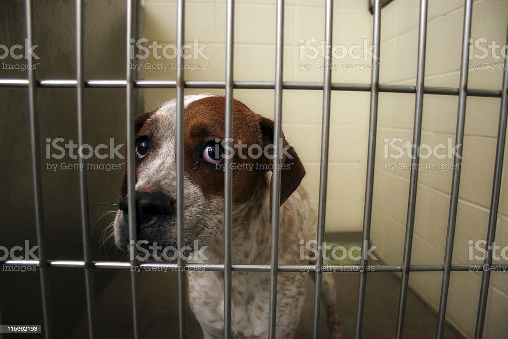 Dog Pound royalty-free stock photo
