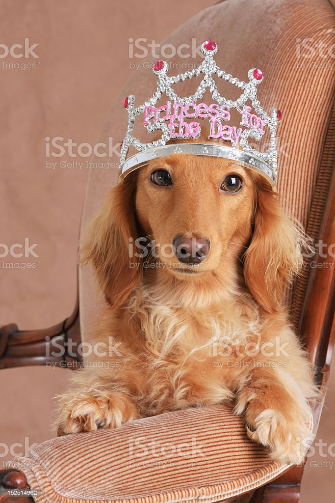 Dog princess royalty-free stock photo