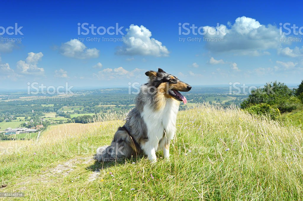 Dog profile on hill with a view stock photo