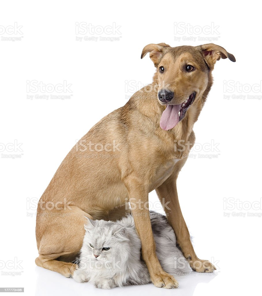 dog protects a cat royalty-free stock photo