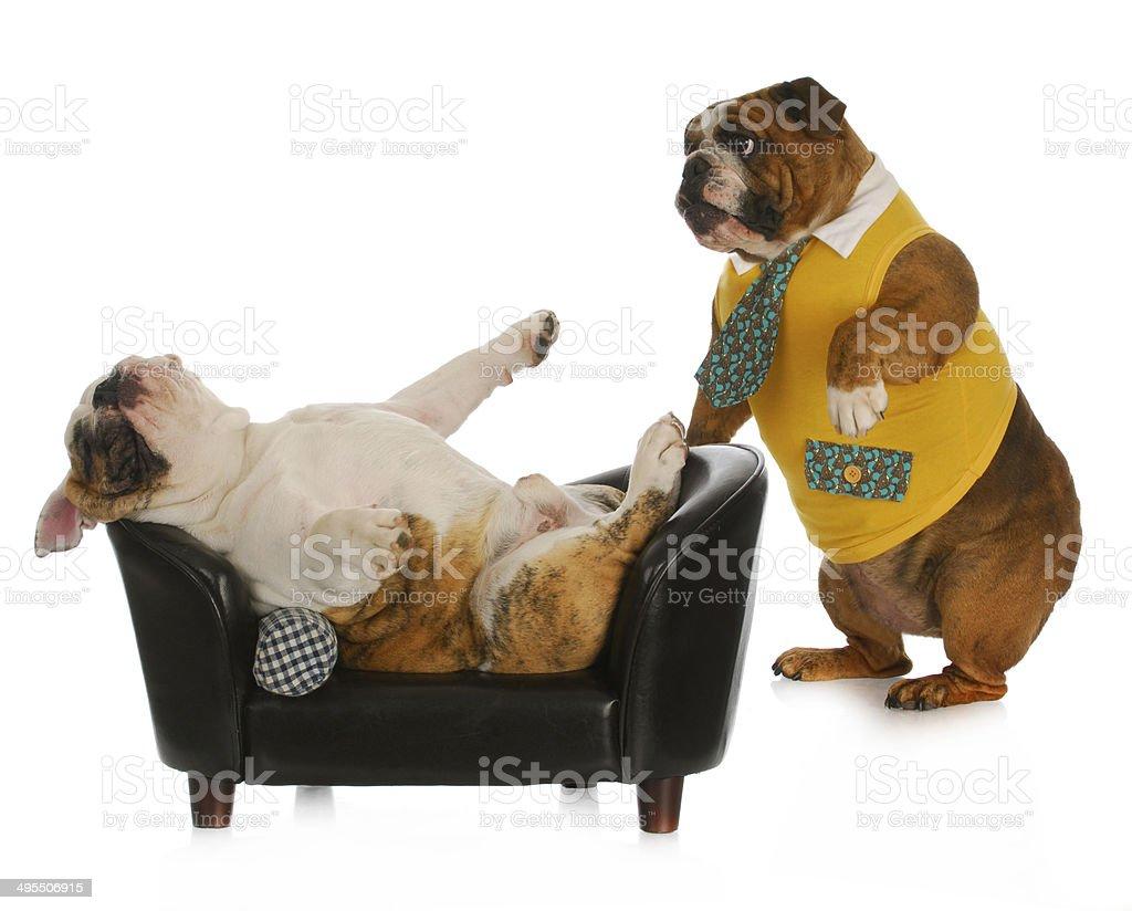 dog psychology stock photo