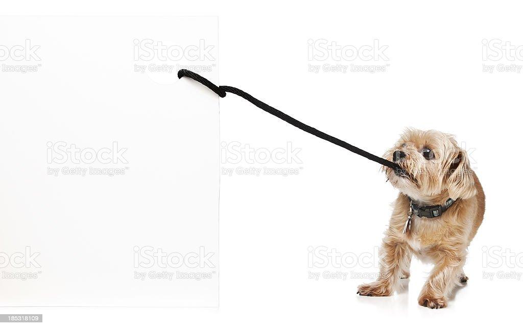 Dog Pulling Sign stock photo