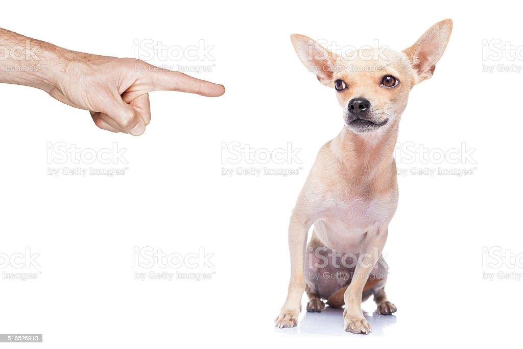 dog punished stock photo