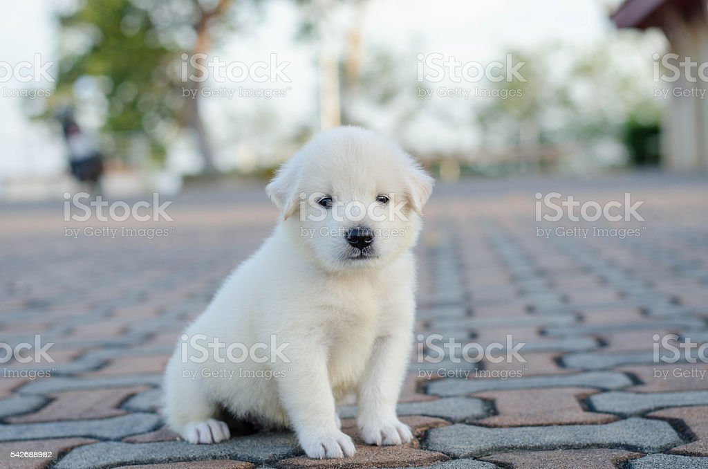dog- puppy outdoors stock photo