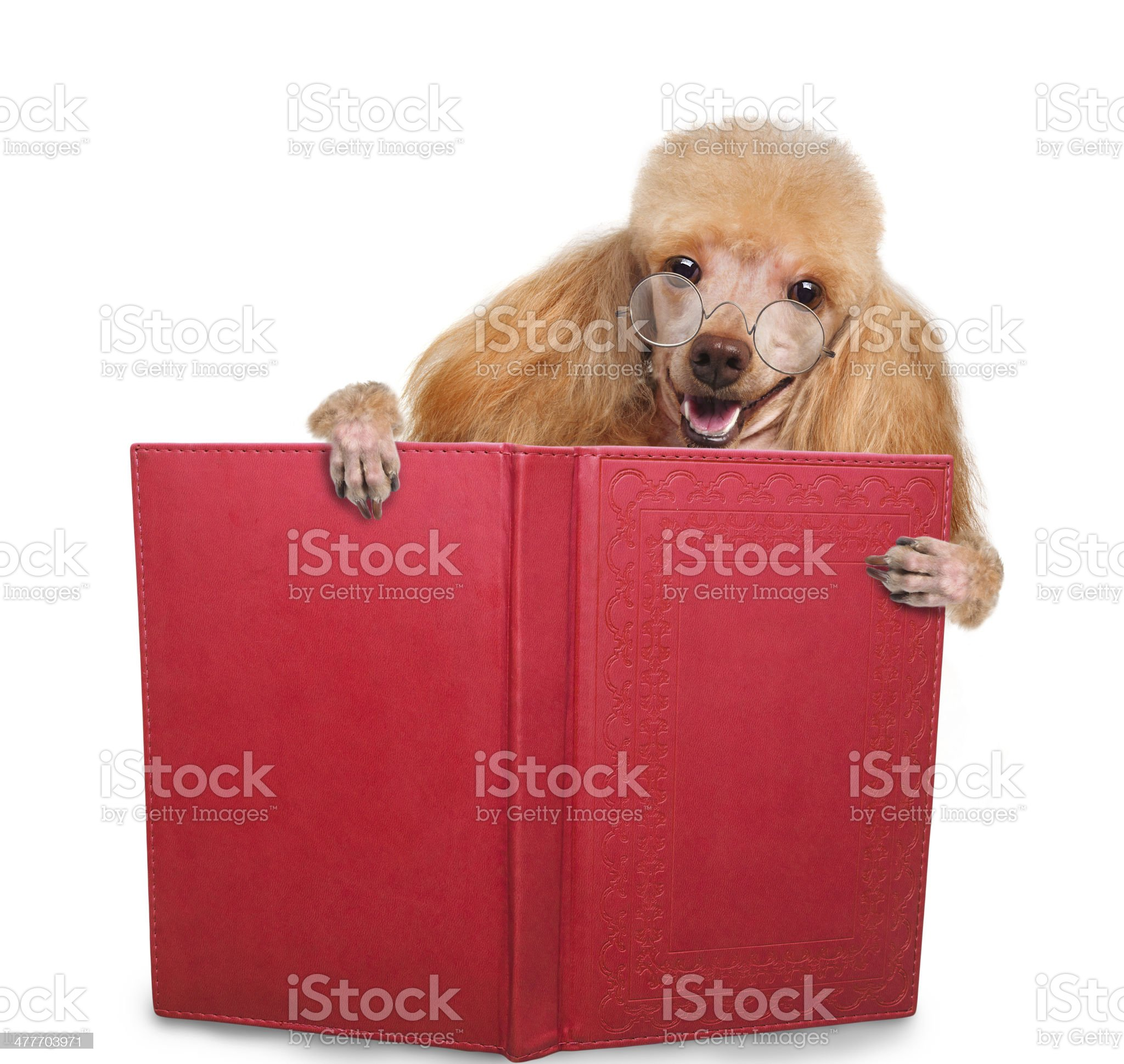 dog reading a book royalty-free stock photo