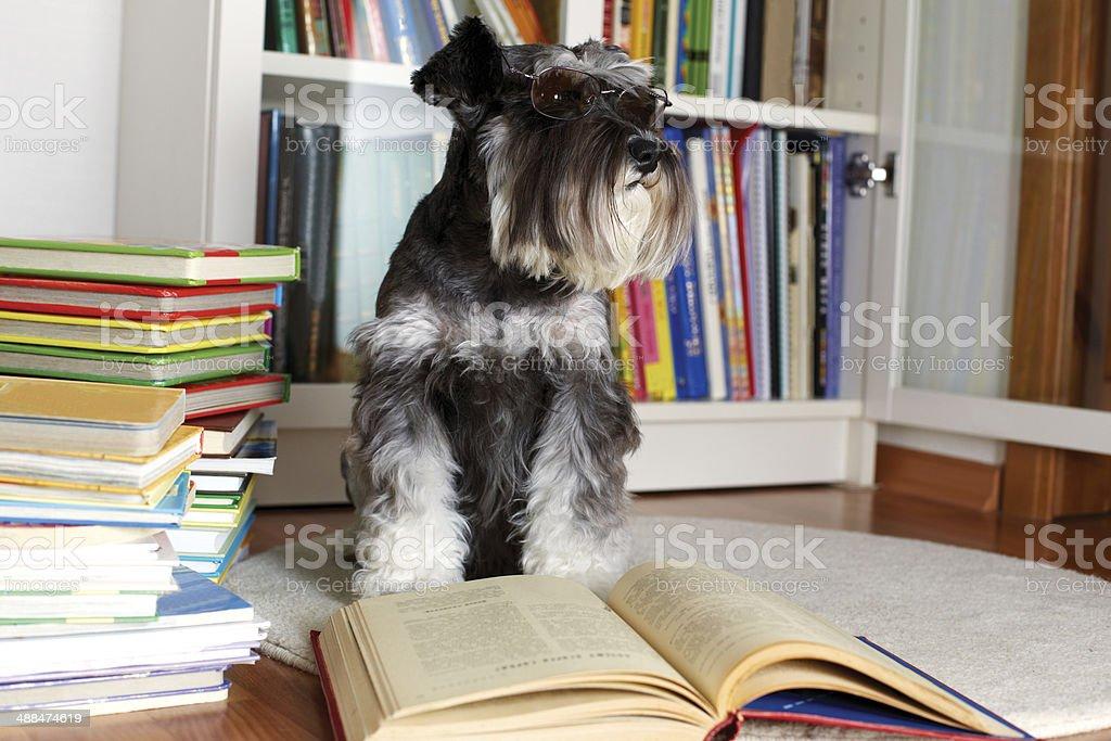Dog reading a book stock photo