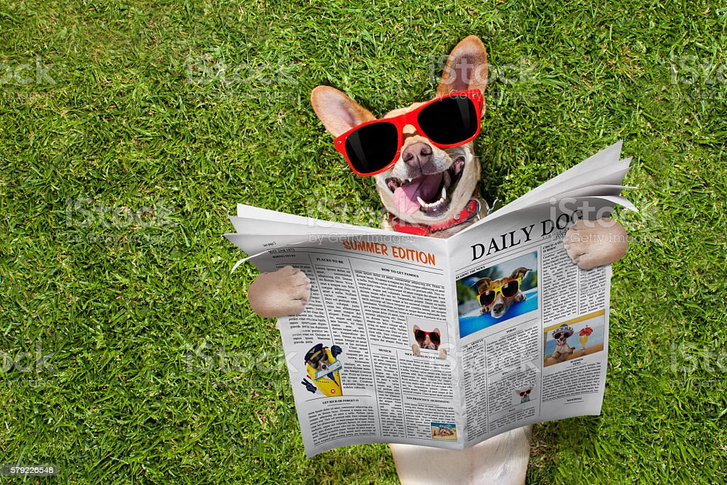 dog reading newspaper stock photo