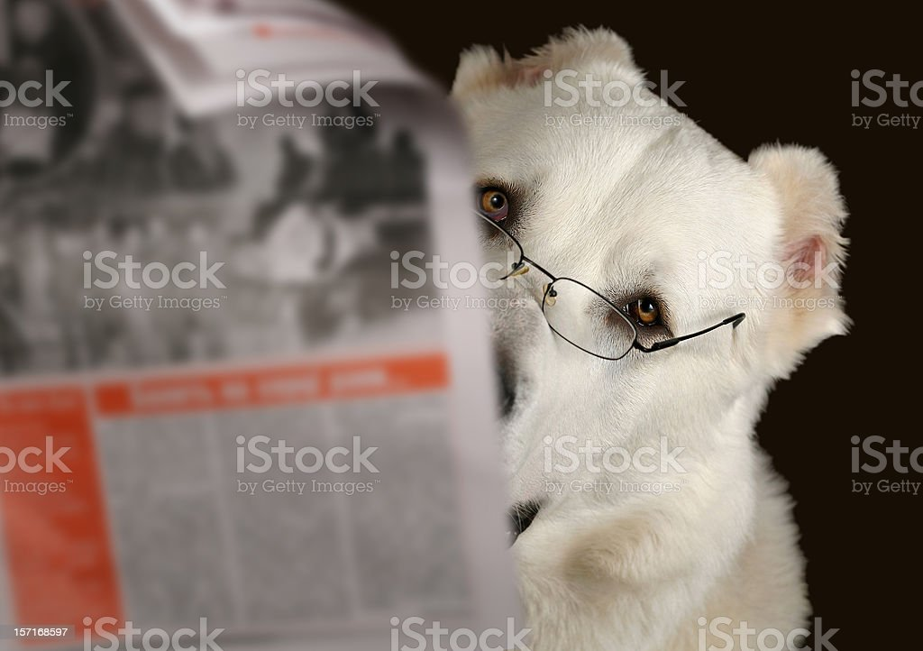 Dog reading newspaper with glasses royalty-free stock photo