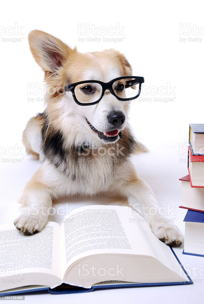 Dog reads book royalty-free stock photo