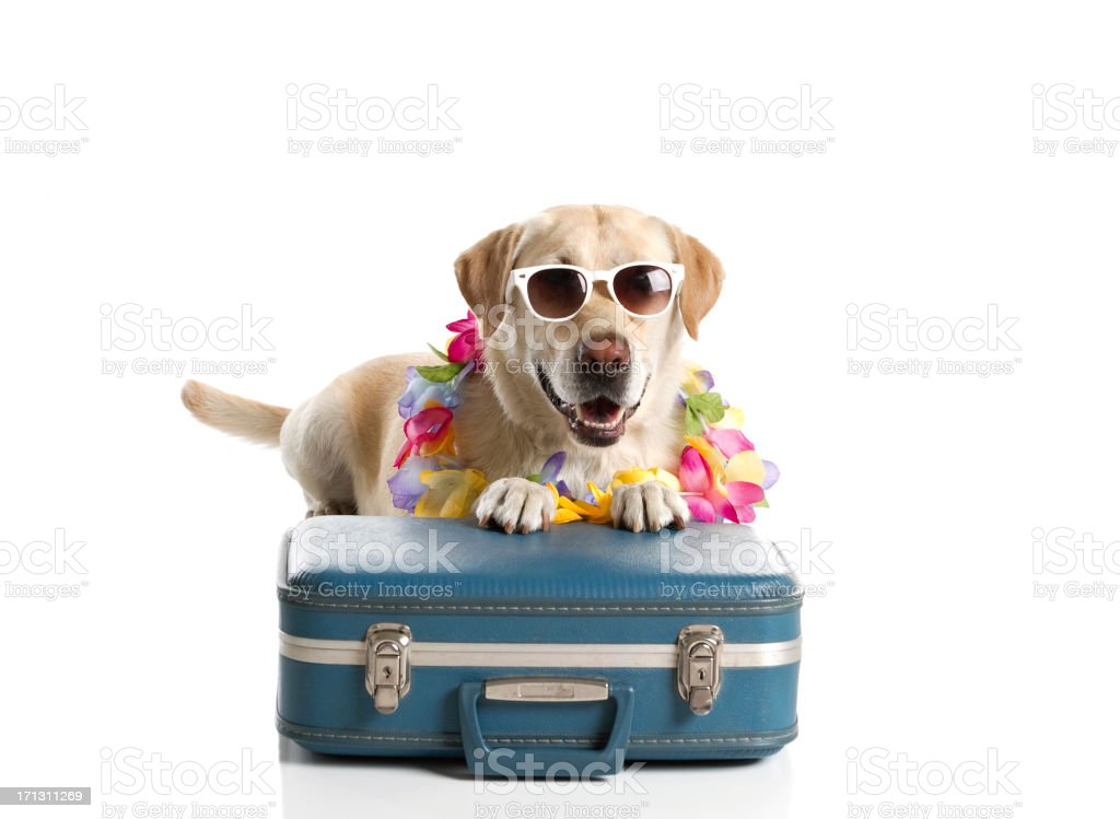 Dog Ready for Vacation stock photo