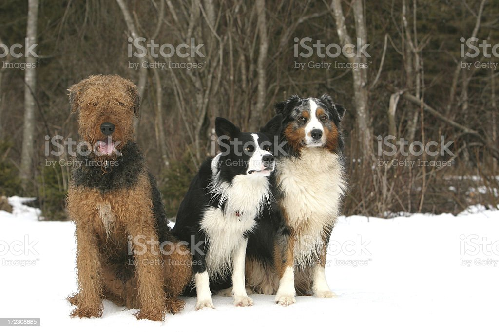 Dog relations royalty-free stock photo