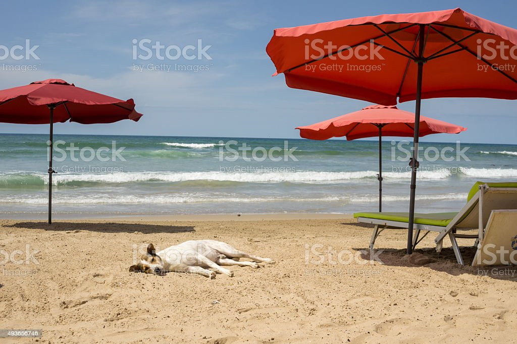 Dog relaxing at the beach Beach stock photo