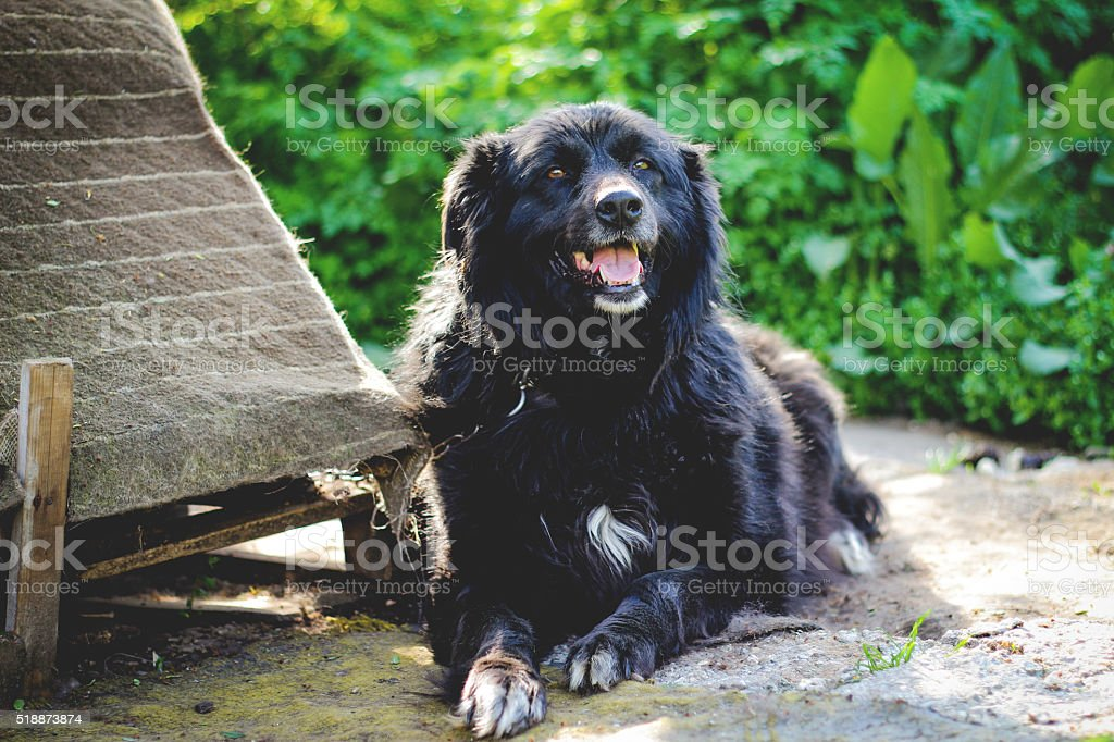 Dog relaxing stock photo