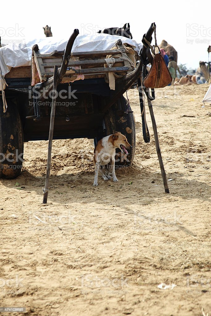 Dog resting in shade under camel cart royalty-free stock photo