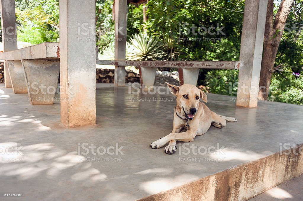 dog resting in the shade, put a paw stock photo