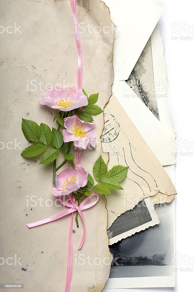 Dog rose flowers with the retro letters and photos royalty-free stock photo