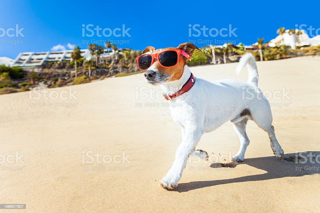 dog running at beach royalty-free stock photo